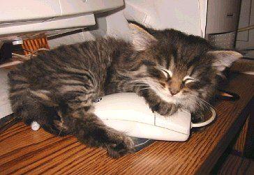 Kočka a myš, věčné téma.