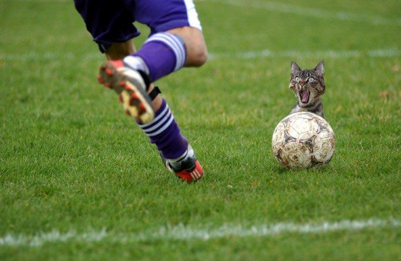No nevím na co ta kočka tak zírá....