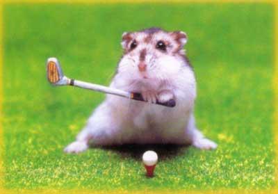 Křeček hraje golf.