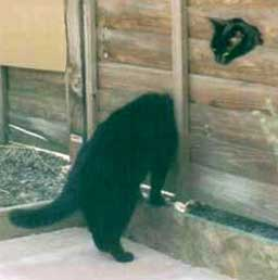 Kočka s dlouhým krkem, myši bojte se!