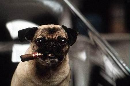 Toto je pes machr.