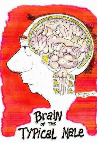 Mozek každého muže.