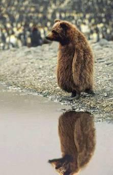 Takhle to vypadá když tučnák prefikne medvěda a nebo naopak :)