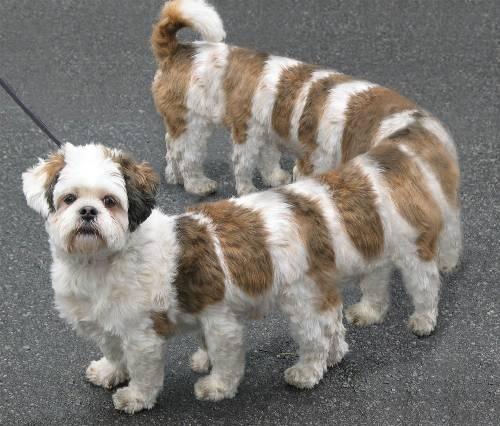 Divná psí stonožka.