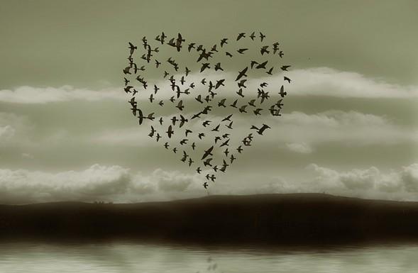 Ptáci přejou k Valentýnu všechno nejlepší.