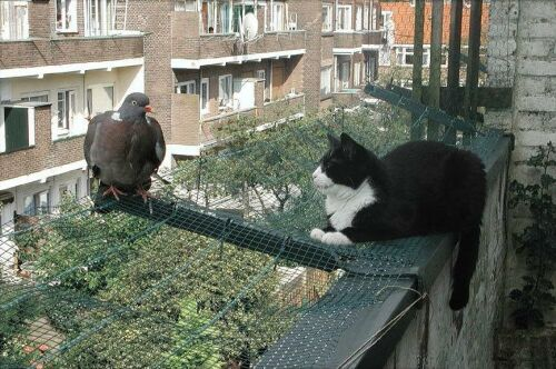 Tak teď nevím, jestli číhá kočka na holuba nebo holub na kočku.